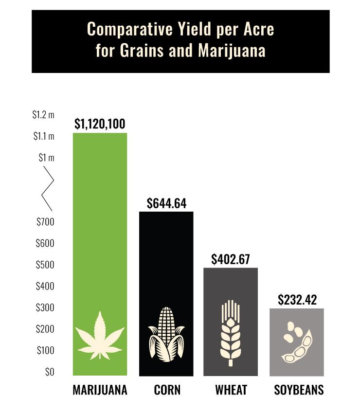 Marijuana VS. Wheat Chart
